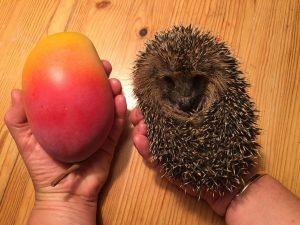 430 g, etwa Mangogröße