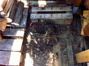 Ausgedientes Wurfnest unter einem auf Paletten gestapelten Holzlager. Foto: Maria Kellner