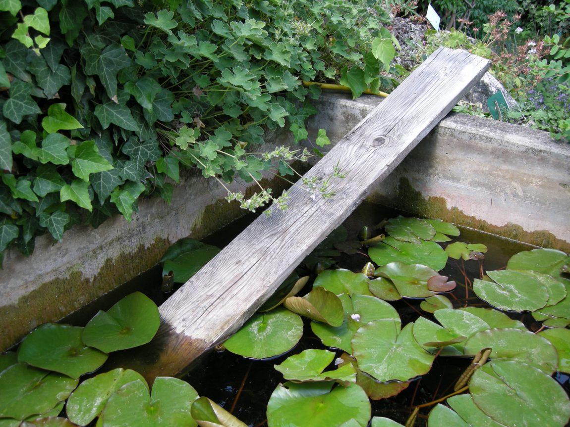 zu-Igelfreundschaft-im-Garten-8.jpg