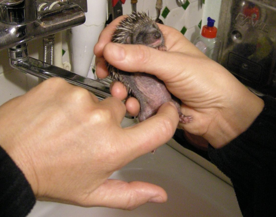 11-22Toiletting22-Säuglinge-können-nur-nach-Stimulation-Urin-und-Kot-absetzen.jpg