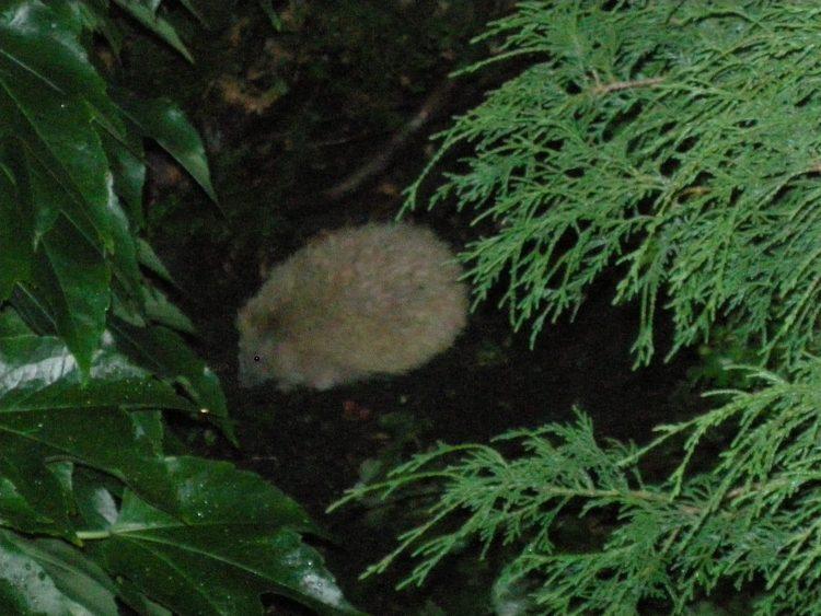 Blonden Nachwuchs haben wir aber nie in unserem Garten zu Gesicht bekommen.