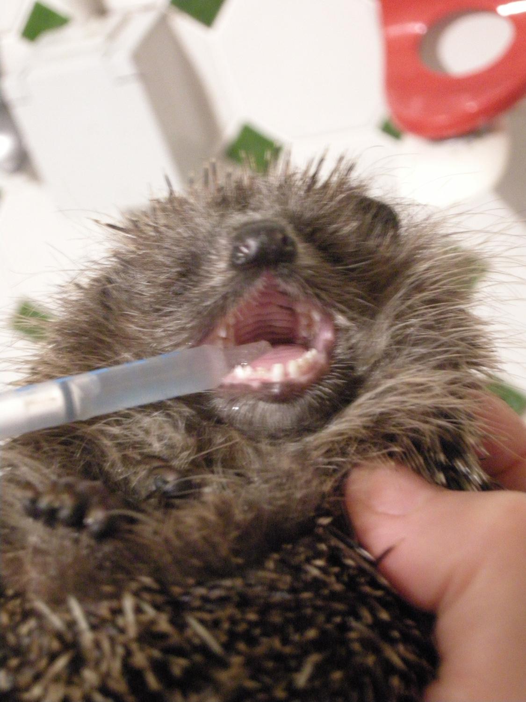 Spülung-nach-Zahnbehandlung.jpg
