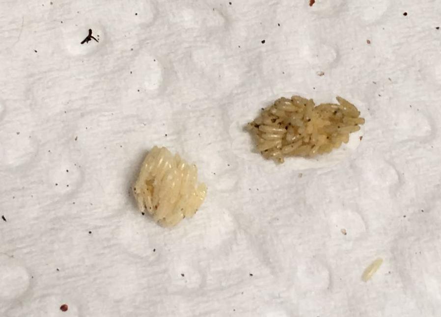 Fliegeneier-auf-Küchenpapier-Foto-Nadine-Schulze.jpg